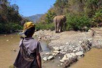 ミャンマーの自然・動物への愛 写真随筆家・大西信吾さん
